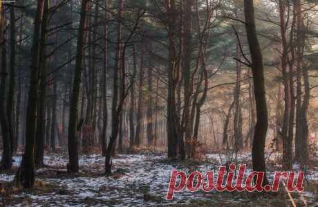 Утро в лесу Калининградской области. Снимал XXXmadmaxXXX: nat-geo.ru/community/user/128217