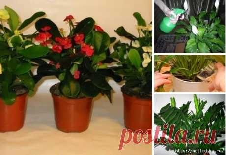 Useful tips to flower growers