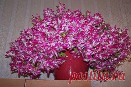 КАСТОРОВОЕ МАСЛО ДЛЯ ПЫШНОГО И ЯРКОГО ЦВЕТЕНИЯ Давно ли Ваш любимый цветок цвел, как на картинке в интернете или в магазине... Цветы на стену - Мой Мир@Mail.ru КАСТОРОВОЕ МАСЛО ДЛЯ ПЫШНОГО И ЯРКОГО ЦВЕТЕНИЯ Давно ли Ваш любимый цветок цвел, как на картинке в интернете или в магазине...  Цветы на стену в социальной сети Мой Мир