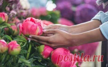 Уход за пионами осенью: подготовьте цветы к зиме правильно! Пионы — красивые и довольно неприхотливые цветы, но даже самому нетребовательному цветку нужен правильный и регулярный уход. Уход за пионами осенью и подготовка их к зиме включают удобрение, обрезку и укрытие цветка, а также ряд других процедур, необязательных к исполнению, но несомненно полезных.
