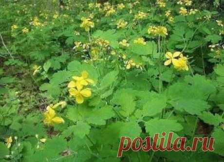 Advantage of a chistotel on the seasonal dacha