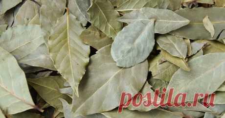 Волшебная лаврушка: чем полезен благородный пряный лист? | Дары природы | Яндекс Дзен