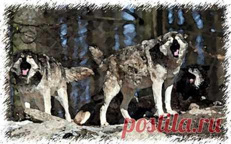Страшные истории из жизни - Волки нападают