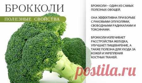 Как вырастить брокколи на огороде Капуста брокколи рекомендуется к употреблению многими диетологами. Эта средиземноморская культура может расти не только дома, но и на огороде, тем более что она невероятно полезна – в ней содержится м...