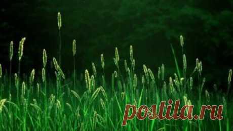 La grama: las propiedades Increíbles salubres, que poca gente sabe