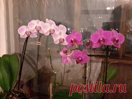 Вот почему у орхидеи сухие корни и что делать | Секреты сада. Дача, цветы | Яндекс Дзен