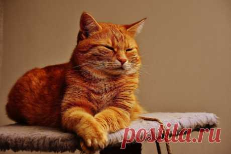 Такой рыжий, такой злой. Но другого кота не надо   Cebepinka   Яндекс Дзен