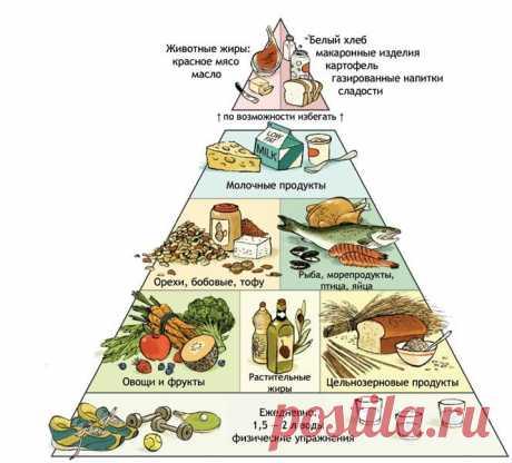 Пирамида питания - Форум ХиКи