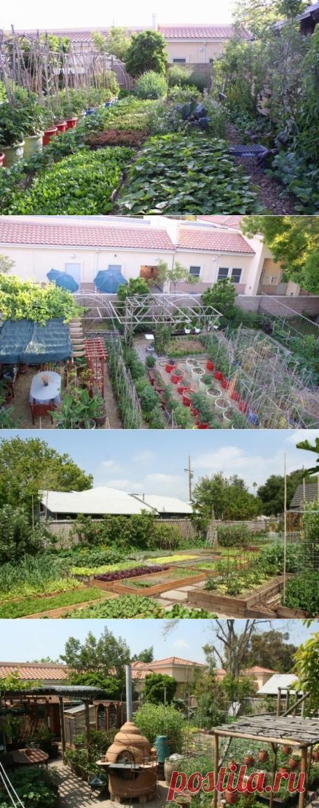 Как земельный участок в 4 сотки может прокормить полгорода?