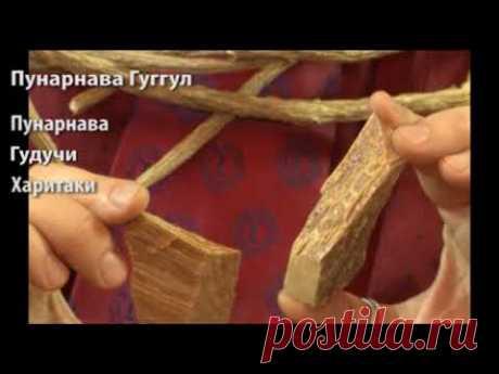 Аюрведа и отёкшие ноги - Пунарнава гуггул