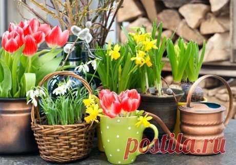 Какие луковичные посадить весной: топ-6 цветущих растений