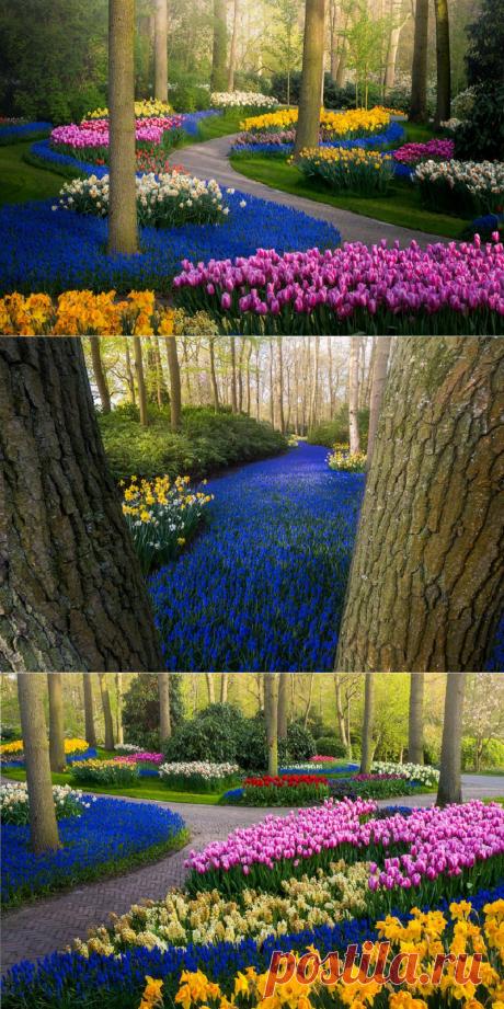 Самый красивый цветник - королевский парк цветов Кёкенхоф, остался без посетителей...