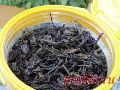 Как изготовить классический черный листовой копорский чай из кипрея (Иван чай). Временные параметры ферментации, разрушения структуры листа, температура и пр...
