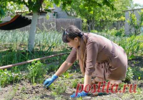 Народное средство, уничтожающее все сорняки!   Азбука огородника   Яндекс Дзен