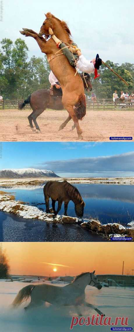 Кони and лошади 100 фото -2 часть » Cайт для друзей: картинки, приколы, фото | kolomensky.com | .