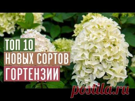 НОВЫЕ СОРТА ГОРТЕНЗИИ 2019 🌟 ТОП 10 ЛУЧШИХ СОРТОВ / Садовый гид