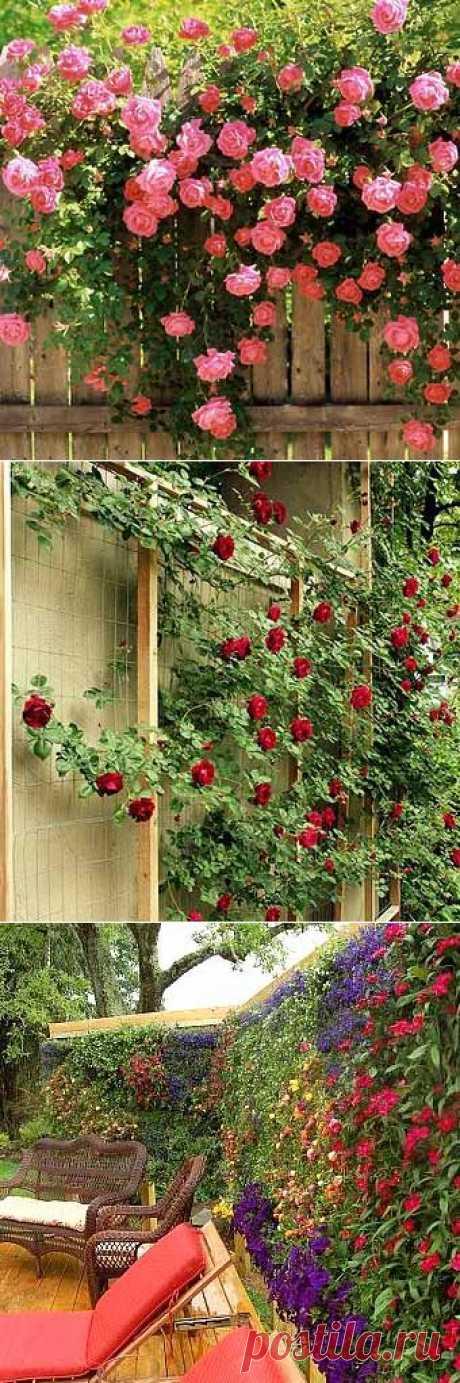 Красивые дачи : 35 фото заборов с цветами | ВСЁ ДЛЯ ДОМА