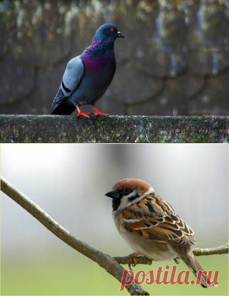 5 птиц, которые появляются в доме с предсказаниями...