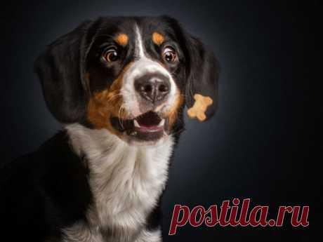 Фотограф запечатлел всю гамму забавных эмоций у собак: