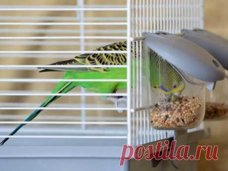 Как обустроить клетку для попугая — советы в Журнале Маркета