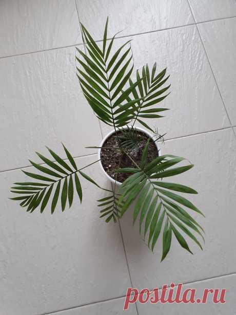 6 домашних растений, с которыми у меня меньше всего забот - простой уход и красивый вид   Антон - цветочник   Яндекс Дзен