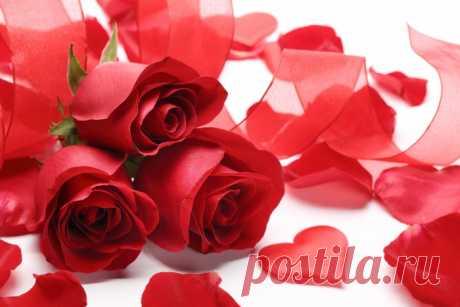 Обои на рабочий стол Цветы:Цветы, Красные розы, Розы - скачать бесплатно.   Обои-на-стол.com