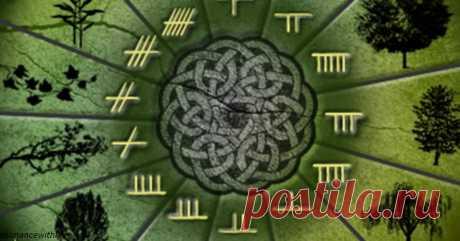 Какое вы дерево по кельтскому гороскопу?