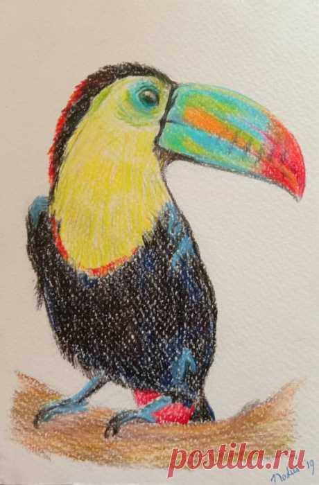Toucan color pencil drawing original bird pencil drawing | Etsy