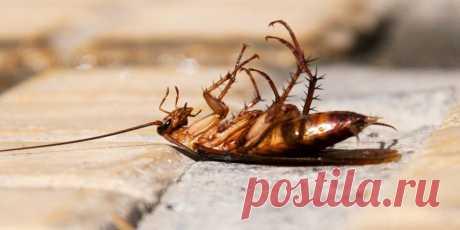 Лайфхак: самодельный спрей от тараканов - Лайфхакер