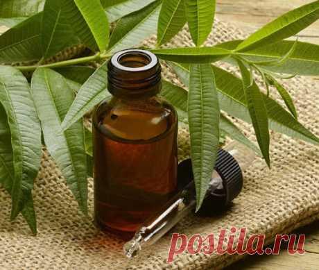 Как использовать в домашних условиях масло чайного дерева