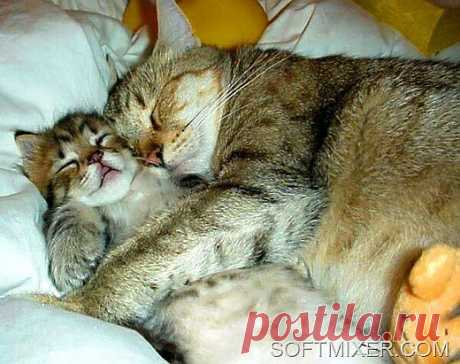 caring-for-cats-sleep%255B5%255D.jpg (image)