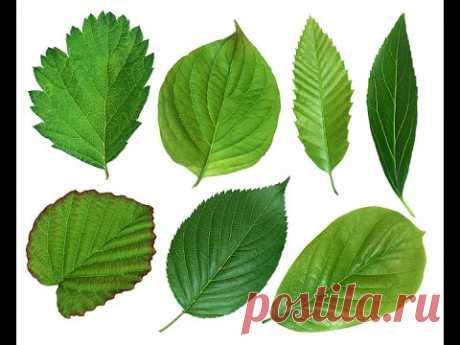 Листочки для цветов канзаши / 2 часть /  Green Leaf for Flowers Fabric