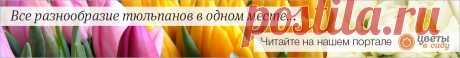 15 красивых и неприхотливых многолетников для сада | В цветнике (Огород.ru)