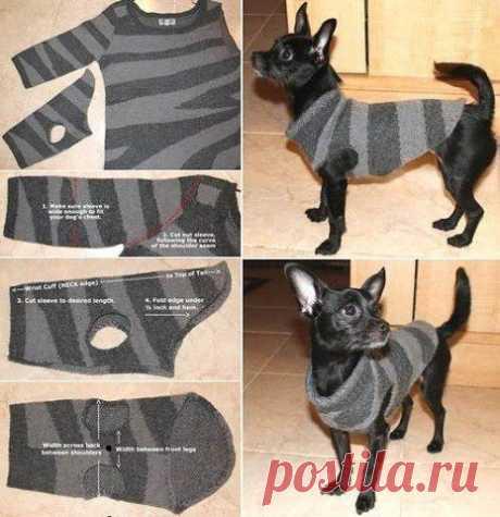 Свитерок собаки своими руками Модная одежда и дизайн интерьера своими руками