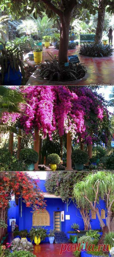 (+1) тема - Удивительный Jardin Majorelle (сад Можераль) ! | УДИВИТЕЛЬНОЕ