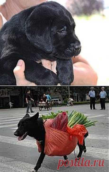 Дрессировка щенка | Ко Мне - дрессировка собаки дома. Дрессировка собак. Дрессировка щенка.Как научить щенка командам