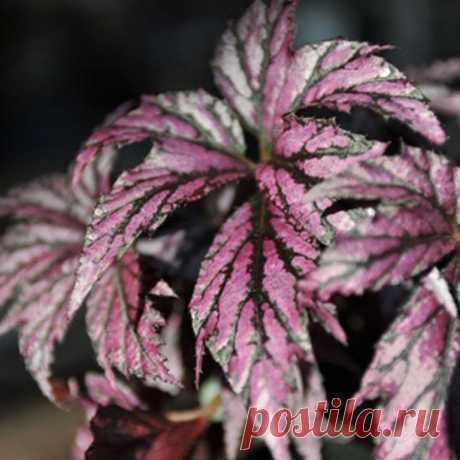 Горшечные композиции из комнатных растений. Горшечный садик. | Любимые цветы