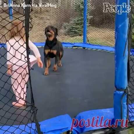 Pup enjoying bouncy time.
