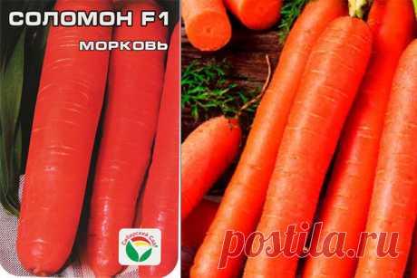 Морковь Соломон F1: отзывы, характеристика, урожайность, фото сорта, достоинства и недостатки, особенности выращивания