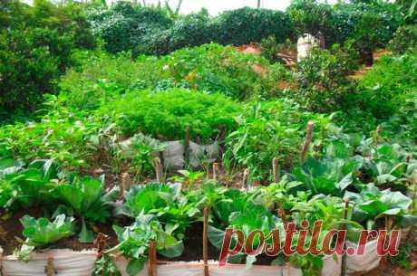Чем подкормить растения летом — 6 соток