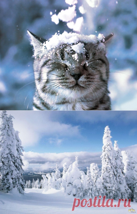Зимние фото_обои на рабочий стол