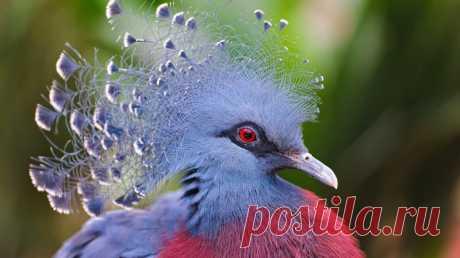 Птицы словно с другой планеты — Наука и жизнь