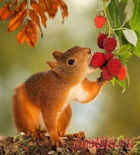Любитель сладких ягод))