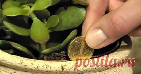 КАК привлечь деньги в дом. Если ты хочешь привлечь деньги в дом, этот трюк точно поможет! Удивительная сила…      Благородный нефритовый цвет листьев толстянки так напоминает цвет хрустящих долларовых купюр! Конечно же, не это …