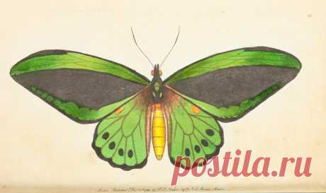 The Naturalist's Miscellany v.1