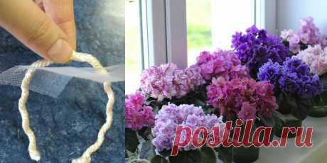 Фиалки цветут круглый год! Благодаря этому методу полива…  Часто в цветоводстве можно встретить такое понятие, как фитильный полив. Этот метод полива стал настоящей находкой для тех, кто постоянно забывает снабдить водой комнатные растения. Стоит заметить, ч…