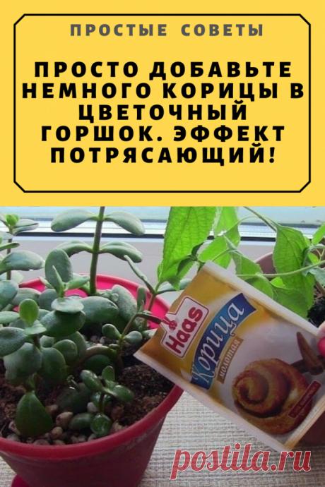 Просто добавьте немного корицы в цветочный горшок. Эффект потрясающий! – Простые советы
