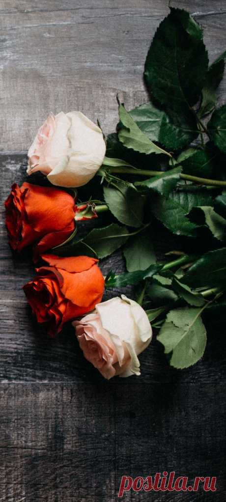 Фото цветов на телефон.