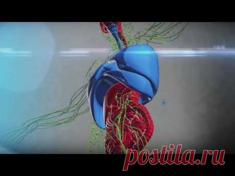 Очищение лимфатической системы - YouTube