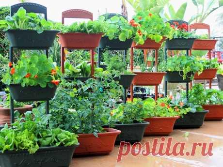 Совмещенное выращивание цветов и овощей в контейнерах - Венская дача